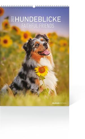 Hundeblicke 2022, Produktbild 1