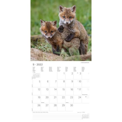 Beste Freunde Kalender 2022, Produktbild 2