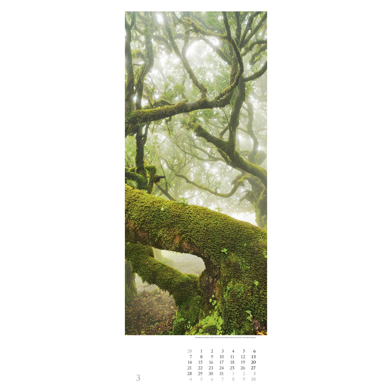 Bäume 2022 – Streifenkalender, Produktbild 4