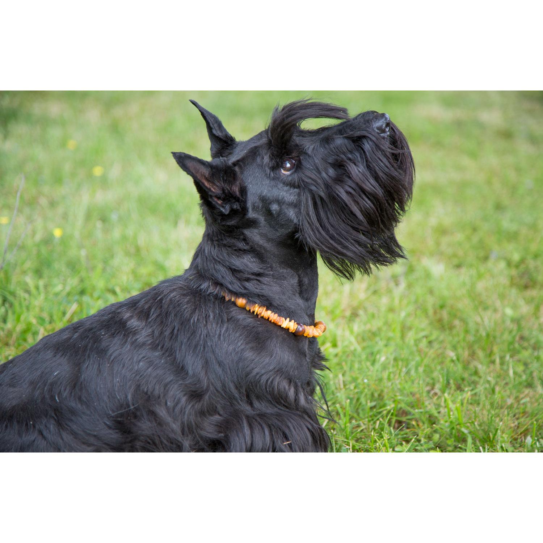 Hunde-Bernsteinkette, Produktbild 3