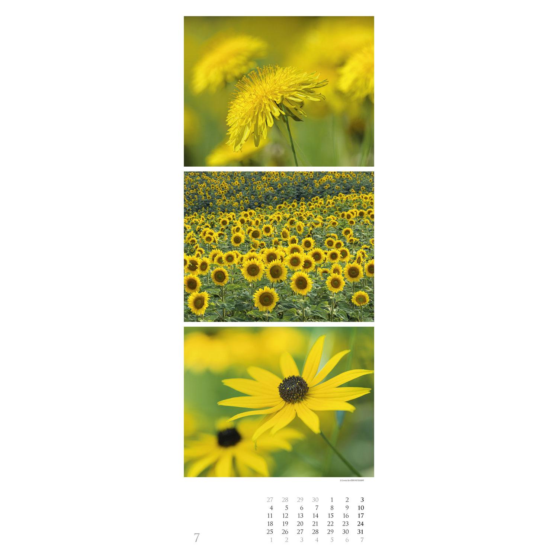 Colours of Nature – Triplets 2022, Produktbild 2