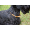 Hunde-Bernsteinkette, Produktbild 5