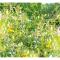 Blumensaatkugel, Produktbild 2