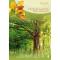 Baumgefährten (Kartenset), Produktbild 2